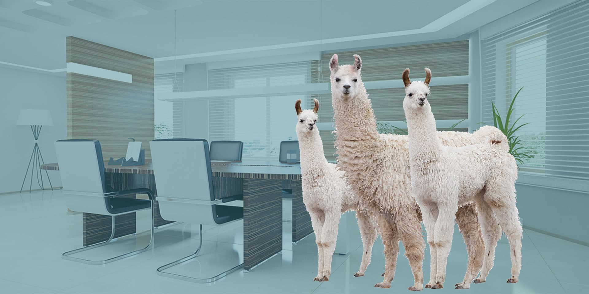 A family of off-white alpacas with two adults and a kid in a modern white office with tall wood room dividers