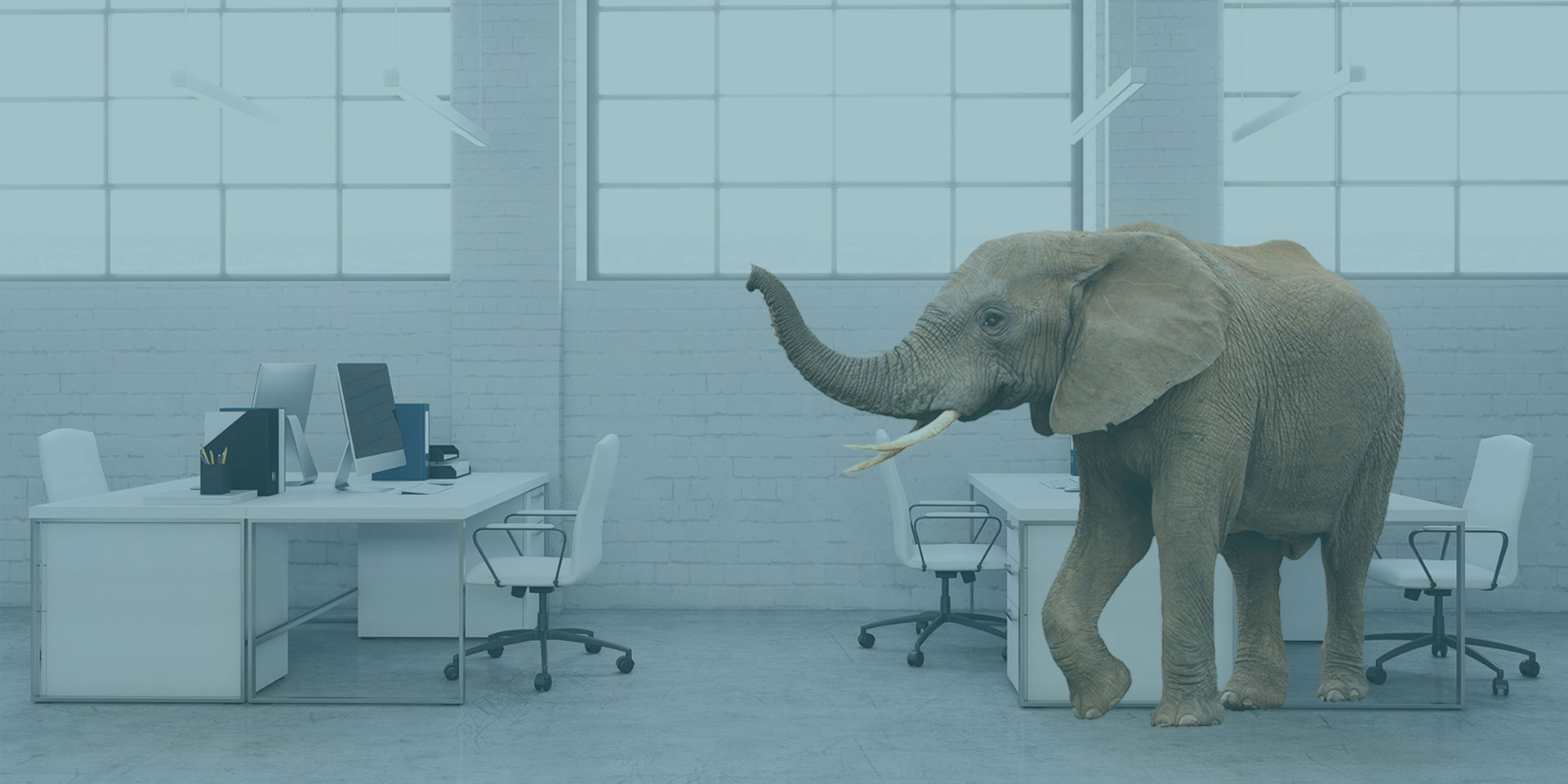 Elephant standing in a modern office with white desks and chairs, large paned windows and brick walls