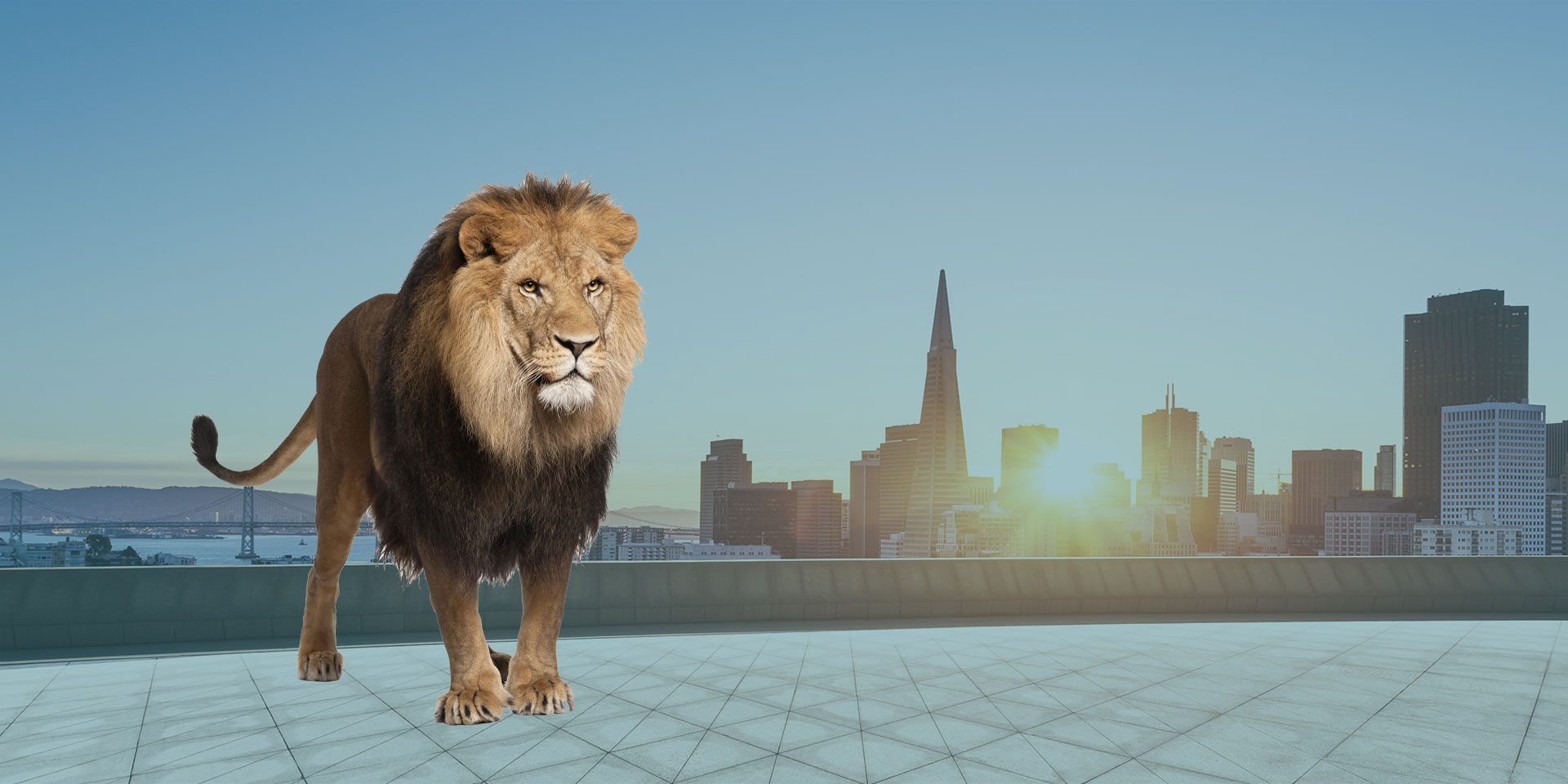 Lion standing on the roof of a building with the San Francisco skyline in the background and a setting sun